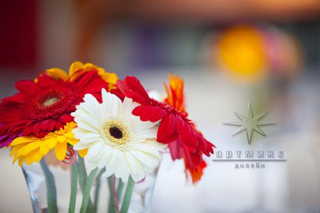 Яркие и разного цвета - одиночные цветы герберы