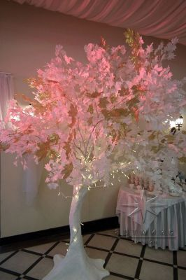 Белые деревья с золотыми кленовыми листьями