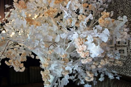 Высокое белое дерево